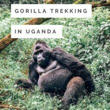 A Guide To Gorilla Trekking In Uganda