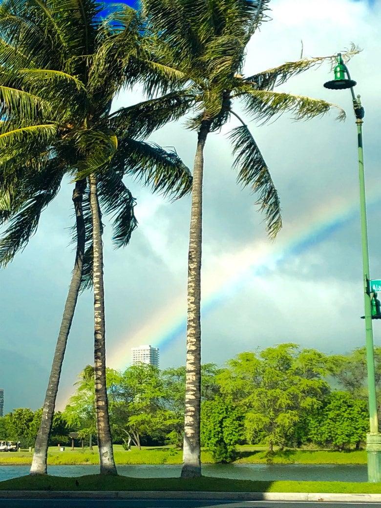 palm trees and a rainbow in Waikiki